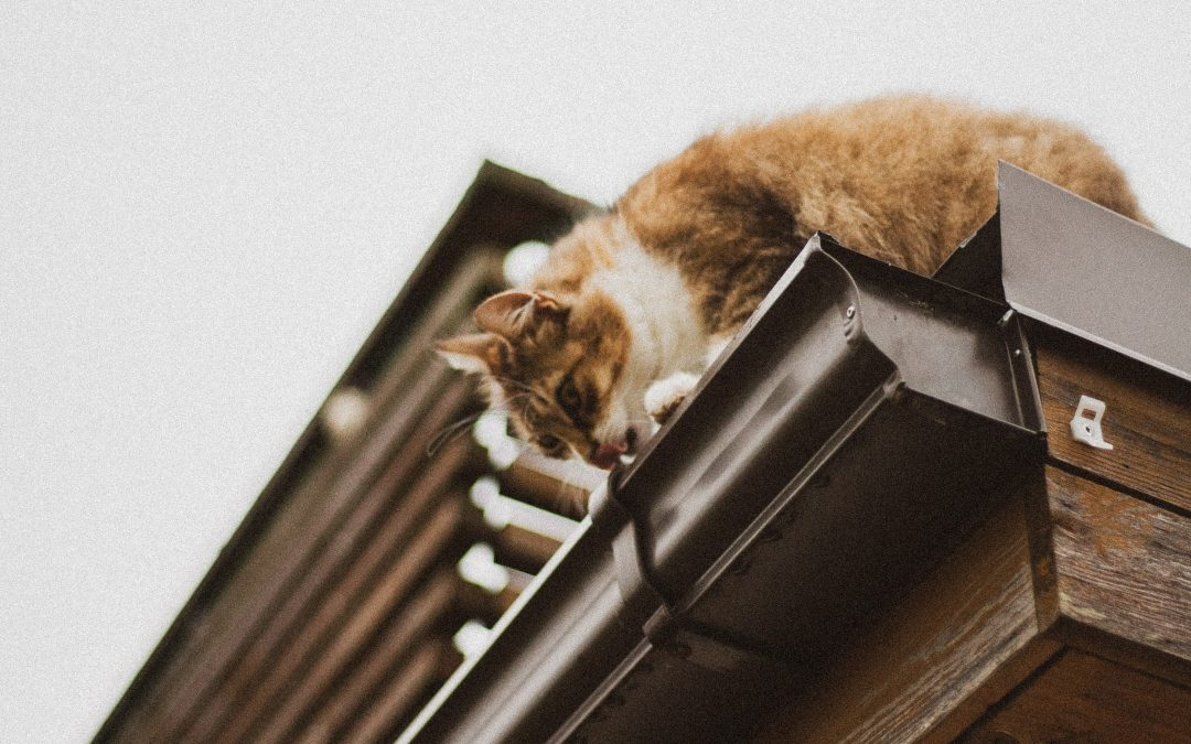 Cleaning and Maintaining Gutters
